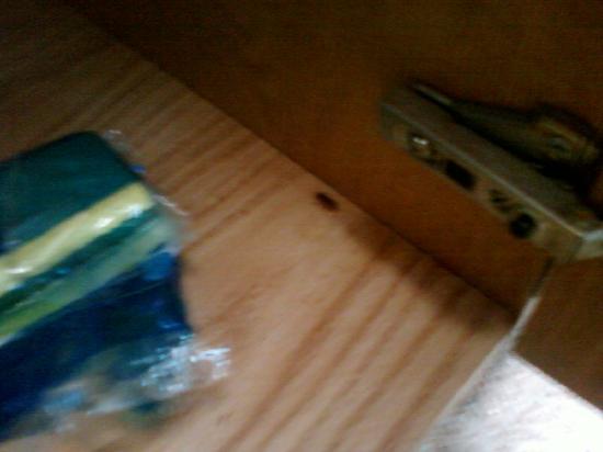 Nashville/Madison Extended Stay Hotel: scarafaggio n°1 zona lavandino