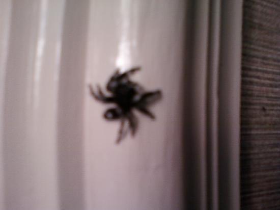 Madison, TN: ragno n°1 zona comodino