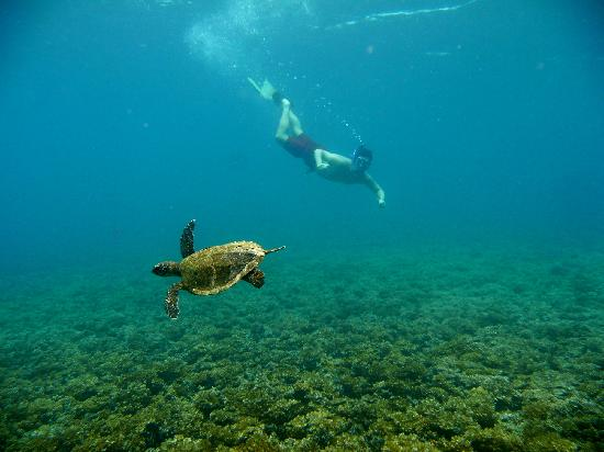 Coiba Island National Park: swiming with turtles