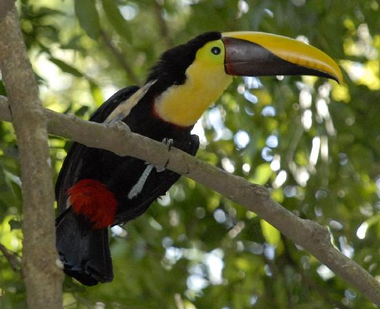 Byblos Resort & Casino: Toucan Nest in the Trees of the Hotel