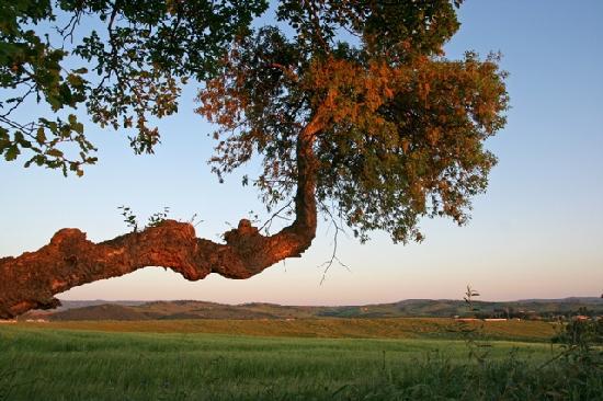 Agriturismo Il Forasacco: Paesaggio 2