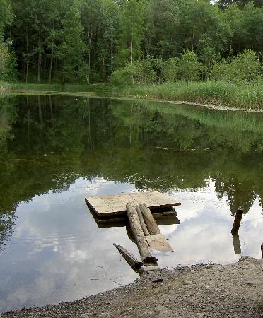 Sorell Hotel Arte: Teich im Wald, Wanderweg unweit Hotel Arte, Spreitenbach