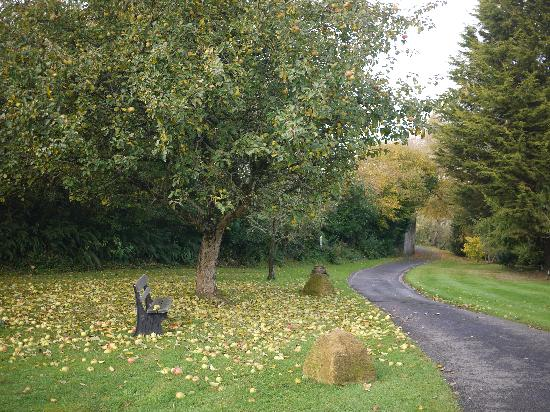 Mill Water House: Apple tree