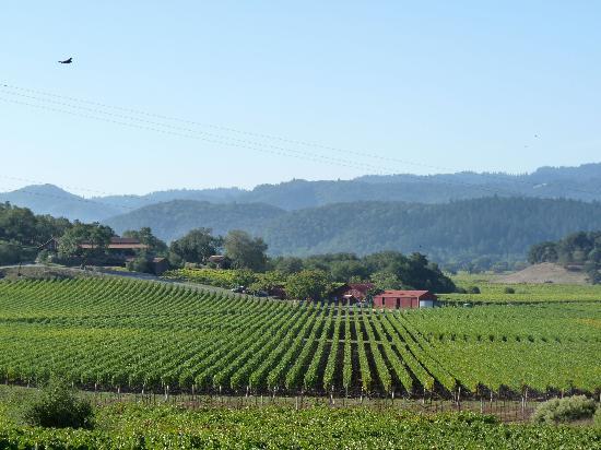 Flex Wine Tours : Classic Napa vine rows