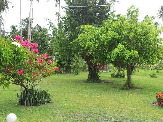 Schöne Blume Im Top Gepflegten Garten Picture Of Viva Vacation