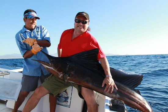 Baja Raiders Sport Fishing Charters : 120 lb. Sailfish - caught around 7am - Oct 31/11
