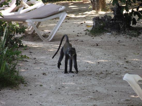 Baobab Beach Resort & Spa : Monkey