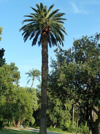 สวนสาธารณะ ปาร์ชิ ดิ เนอร์วิ