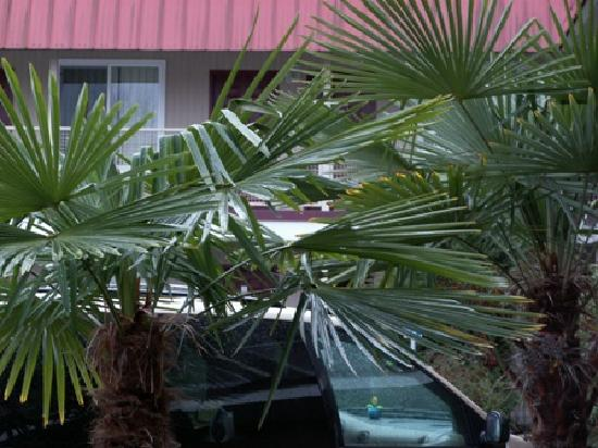Express Inn and Suites: Palm Trees