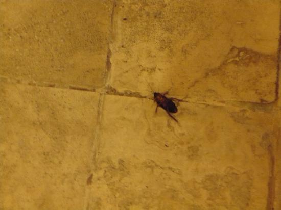 Ocean Five Hotel: die erste Kakerlake