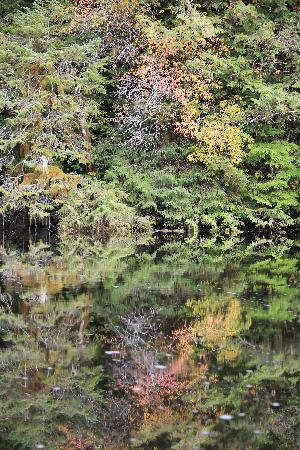 Great Bear Lodge: Reflection of Fall Colours