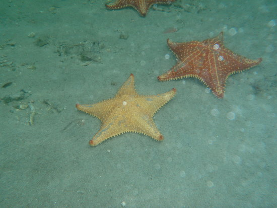 Bocas Town, Panama: Playa de las estrellas