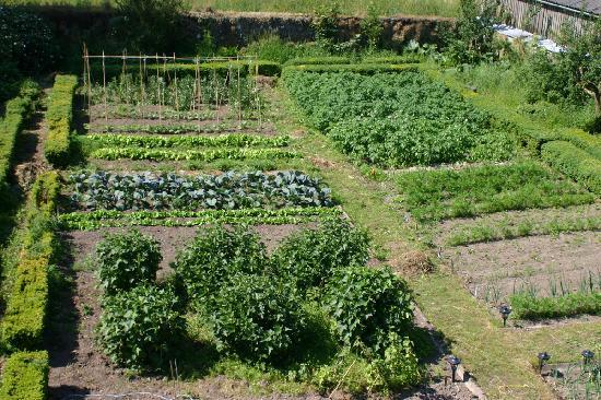 Cormiston Farm B&B: Kitchen Garden