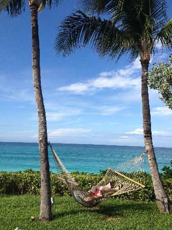 Paradise Island Beach Club: Hammock by the pool.