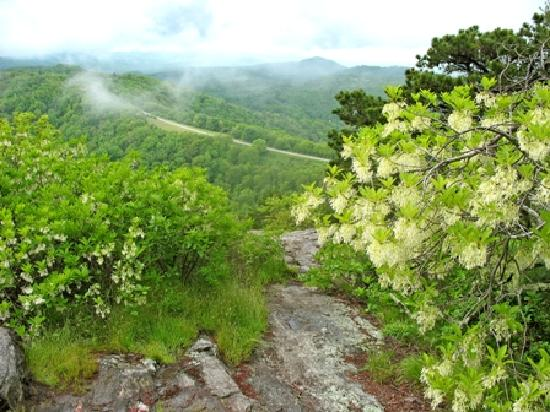 North Carolina Mountains, Βόρεια Καρολίνα: Doughton Park view from Bluff Mountain.Photo Copyright Bill Bake, 2009.