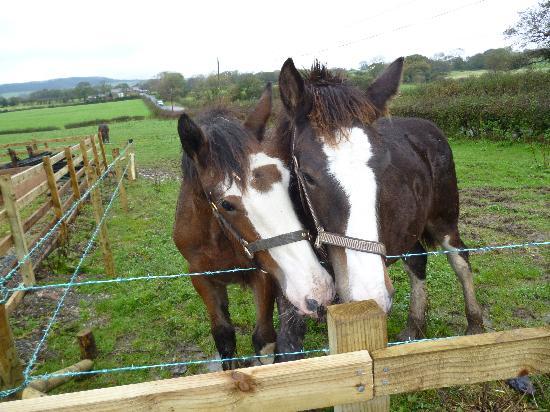 Isles Field Barn: this year