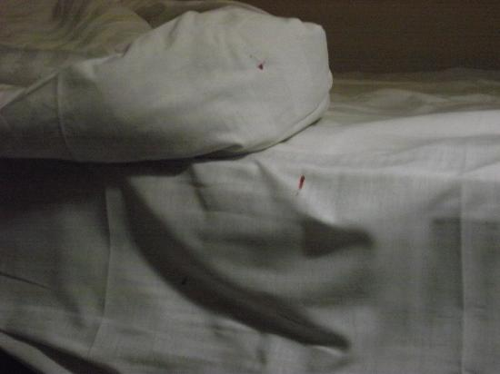 Hyde Park Hotel: Bedbugs