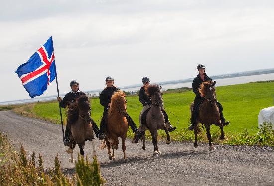 Egilsstadir 1: Islandpferde hautnah!! Showvorführung auf der Farm ...