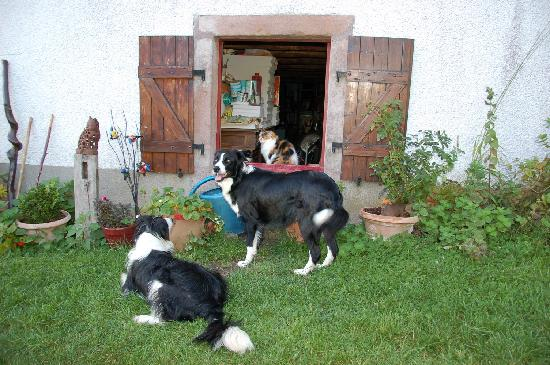 La Colline Aux Loups : trois bêtes