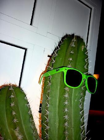 Kactus Café: Kactus Cafè