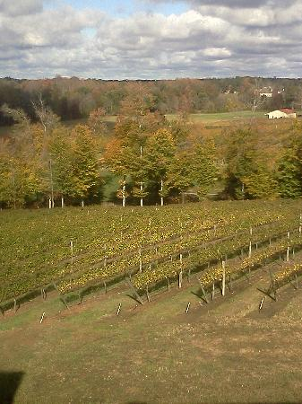 Holiday Inn Express & Suites Lexington NW-The Vineyard: View of Vineyards From Room Window