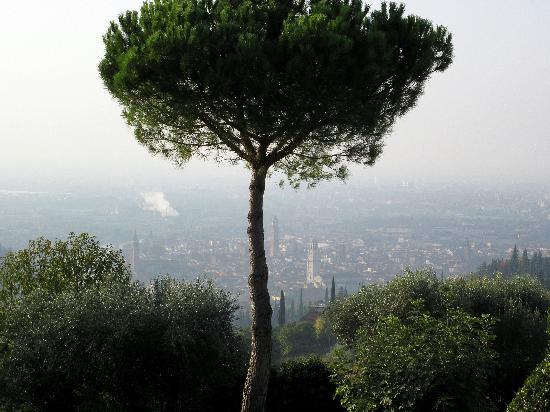 Agriturismo San Mattia: Verona vista da san Mattia