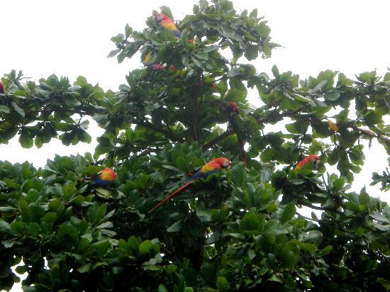 Cabinas Pura Vida: sorrounded by wild life