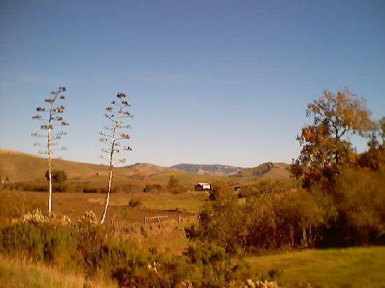 Paso Robles Inn: The Paso Robles landscape -- soothing serenity!