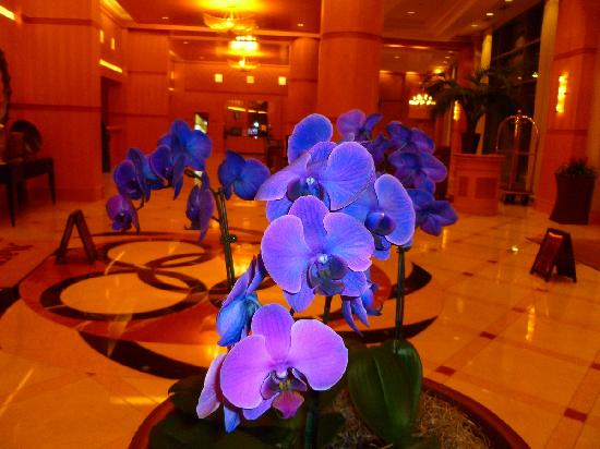 Bethesda North Marriott Hotel & Conference Center: Blue orchid in the hotel lobby