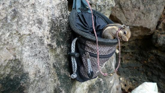 Railay Beach, Tayland: Layon, the pet squirrel who lives in a chalk bag