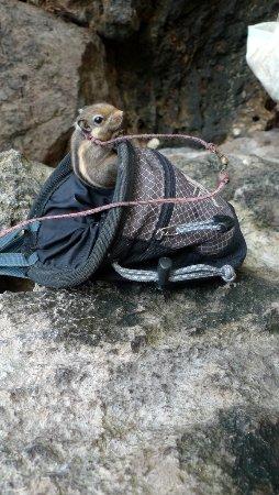 Railay Beach, Thailand: Layon, the pet squirrel who lives in a chalk bag