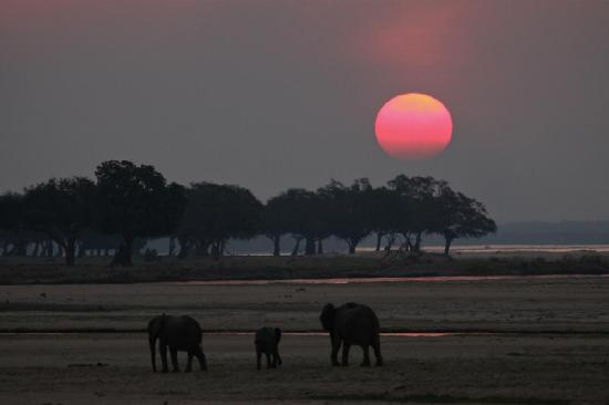 Camping Sites at Mana Pools National Park : Mana sunset