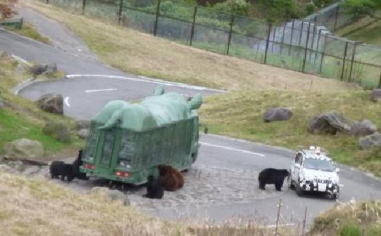 Usa, Japan: Bears want food.