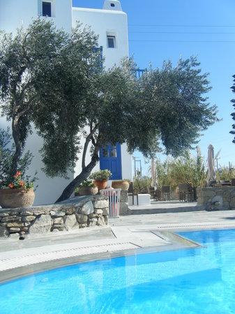 Vienoula's Garden: Olive tree