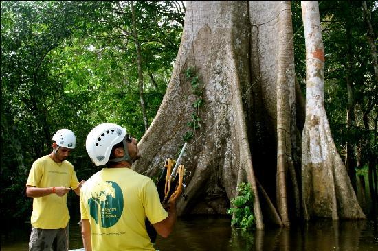 Amazon Tree Climbing: the action starts!