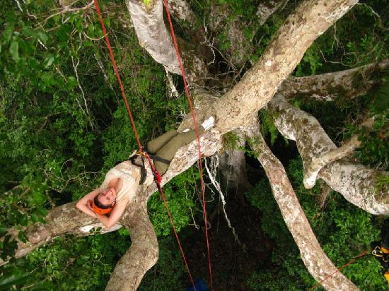 Amazon Tree Climbing: relaxing moments in the high tree top