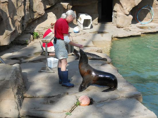Saint Paul, MN: Sea lions