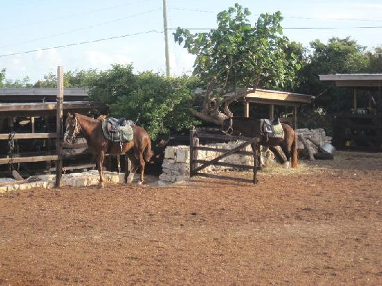 The ranch picture of provo ponies providenciales for Db ranch