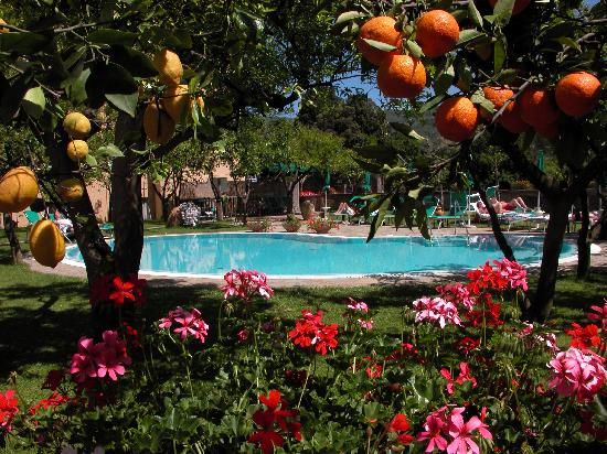 Antiche Mura Hotel: Swimming Pool & Citrus Grove Garden