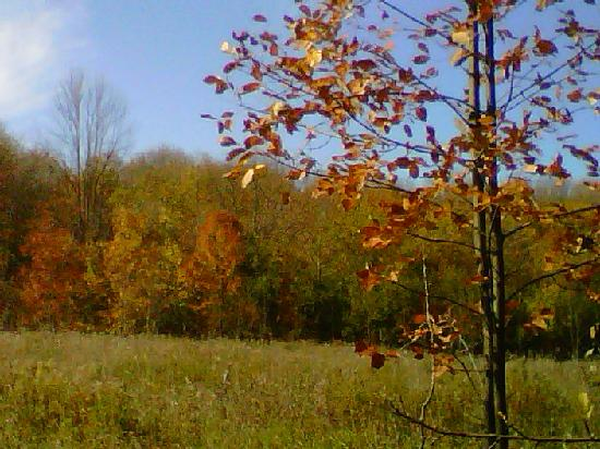 Red Hills B & B: View of Woods in autumn