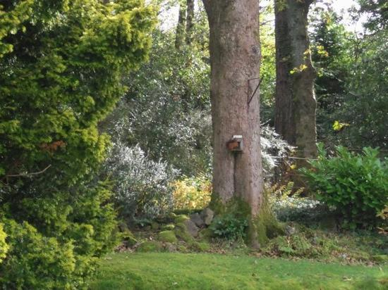 one of red squirrels that frequently visits the grounds at Claremont House