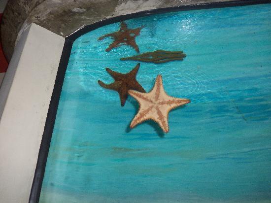 Etoile De Mer Picture Of National Aquarium Santo Domingo