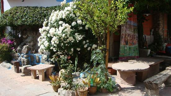 # Pachamama Hostel: Rose bushes - patio