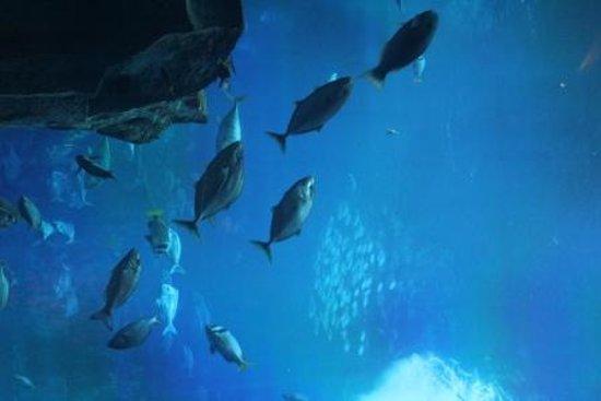 The Lost Chambers Aquarium: One part of aquarium