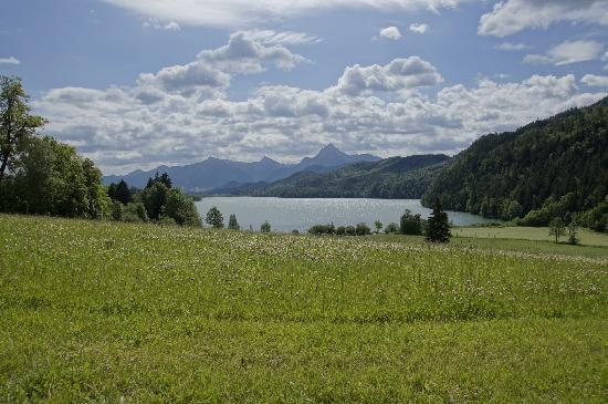 Forggensee: Froggensee