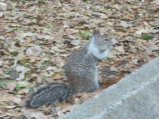 Folsom Lake State Recreation Area: Thousands of Squirrels
