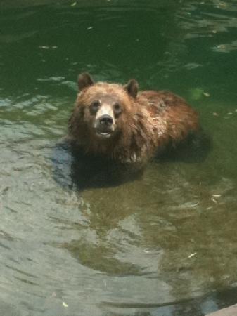 Tulsa Zoo: sad bear