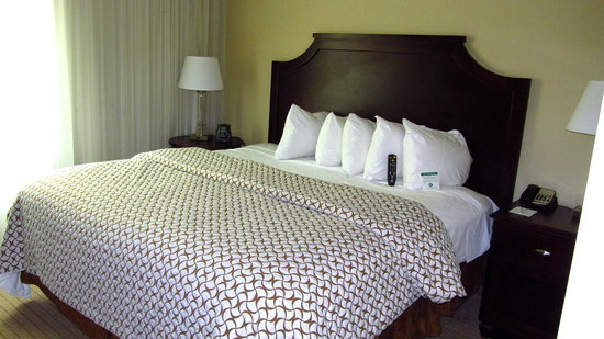 Embassy Suites by Hilton Tampa - Downtown Convention Center : Our room