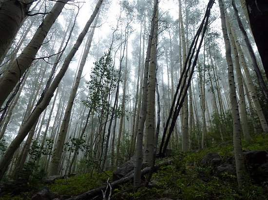 Santa Fe Walkabouts: Santa Fe National Forest, morning mist
