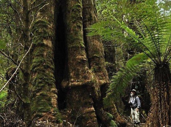 Tarkine Wilderness Lodge: The Traveller